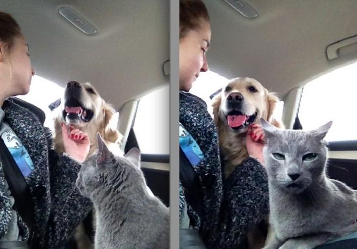 Chica haciendo cariños a un perro frente a un gato