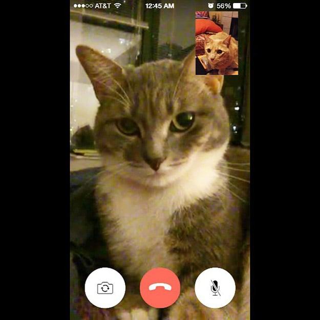 Videollamada por un celular entre dos gatos