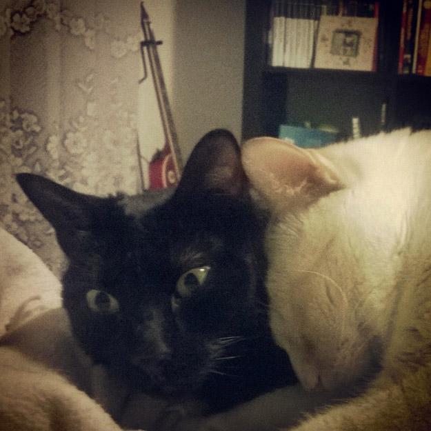 Caras de un gato a un costado del otro