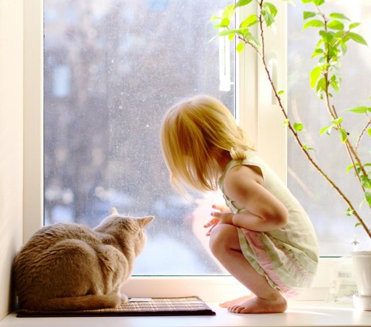Gato sentado en el suelo viendo hacia la ventana con una niña a su lado