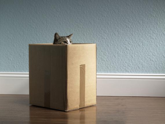 Gato dentro de una caja asomando su cabeza