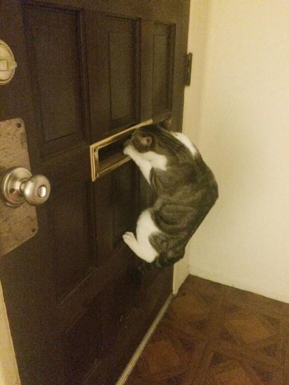 Gato colgado en una puerta asomándose por el buzón