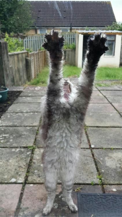 gato rayando la ventana