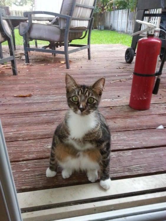 gato sentado en el patio
