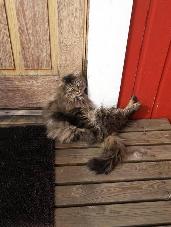 gato sentado esperando que le abran