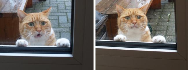 gato afuera esperando que le abran