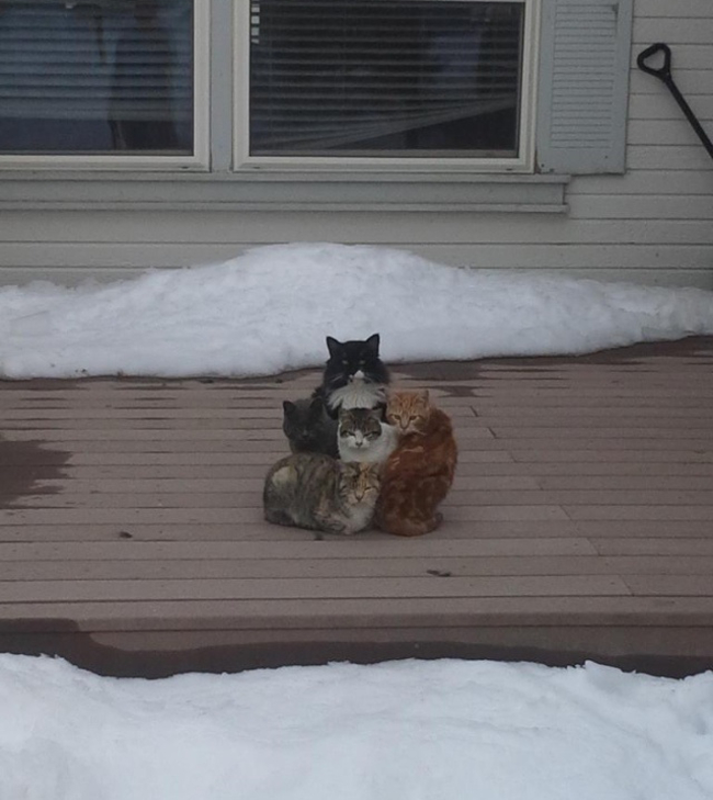 4 gatos afuera esperando entrar