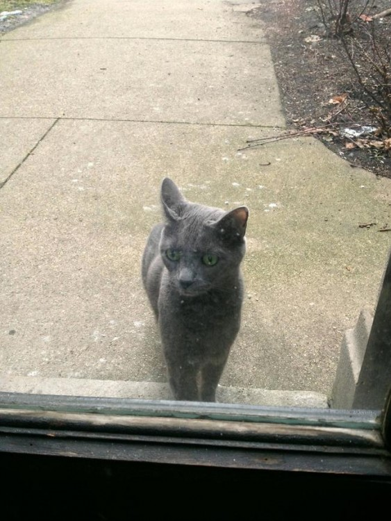 gato esperando entrar