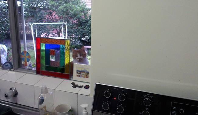 gato que quiere entrar
