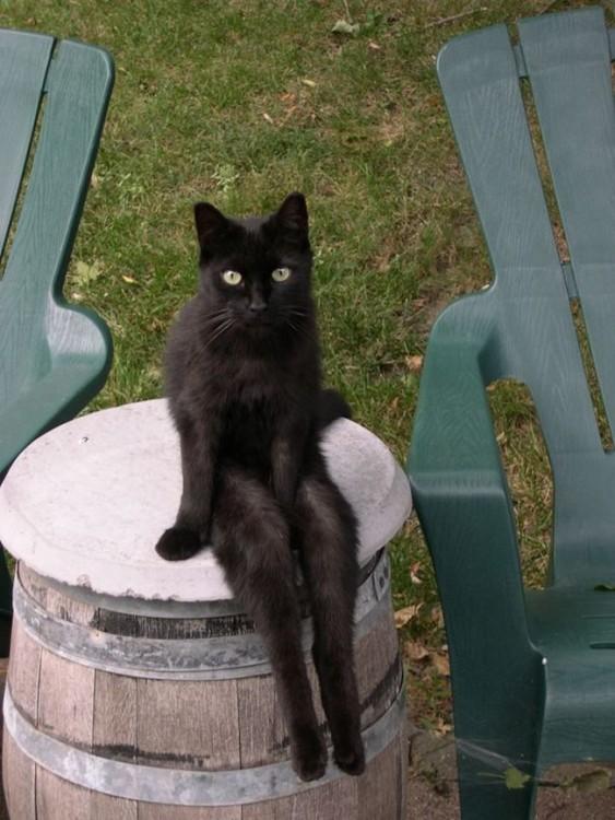 gato sentado chistoso