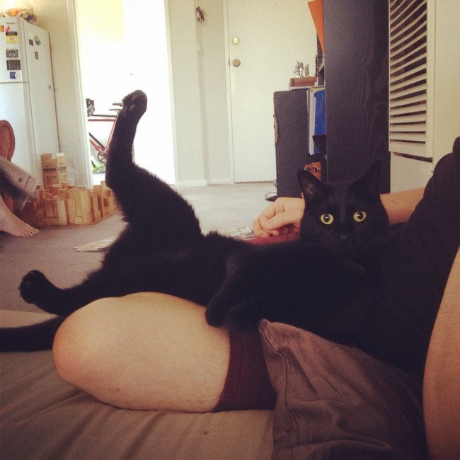 gato negro sentado chistoso