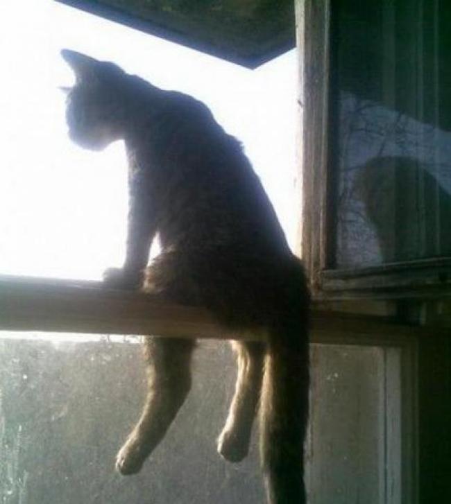 Gatos que se sientas chistosos (14)