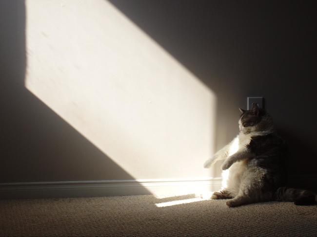 Gatos que se sientas chistosos (15)