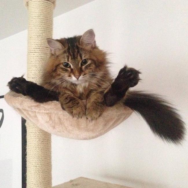 gato en una hamaca