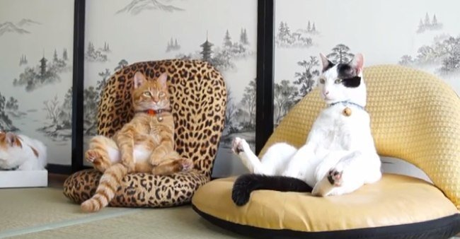 2 gatos sentado chistoso