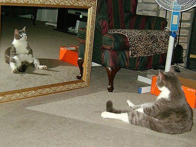 Gatos que se sientas chistosos (24)