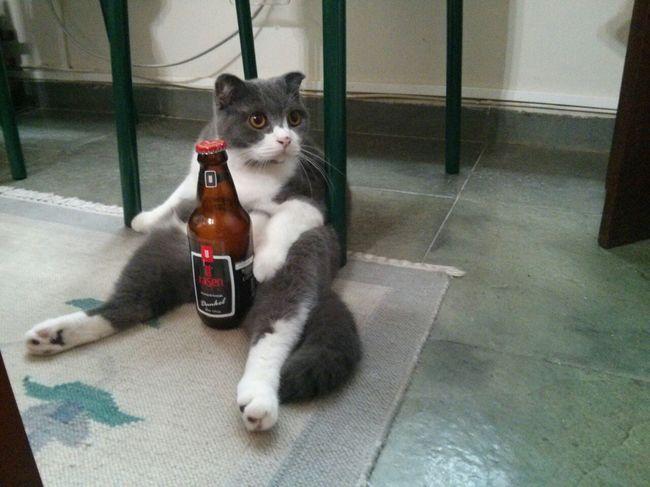 Gatos que se sientas chistosos (4)