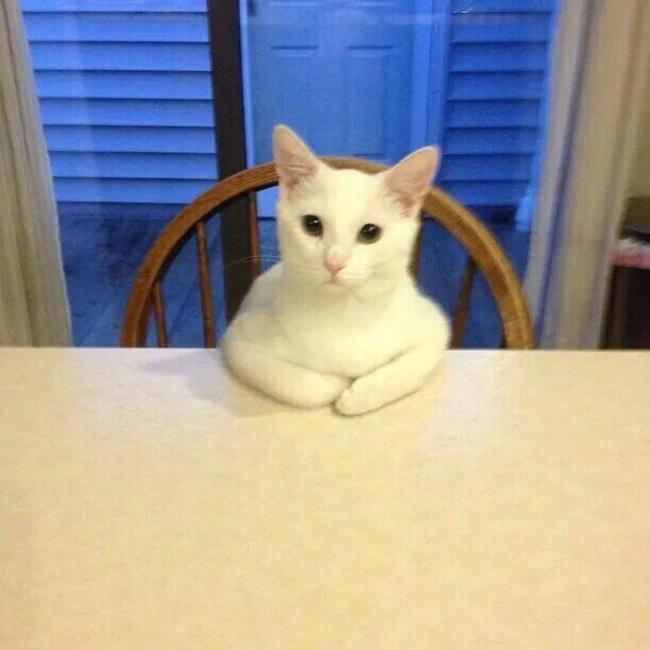 gato en la mesa con las patas arriva