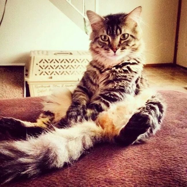 gato sentado raramente