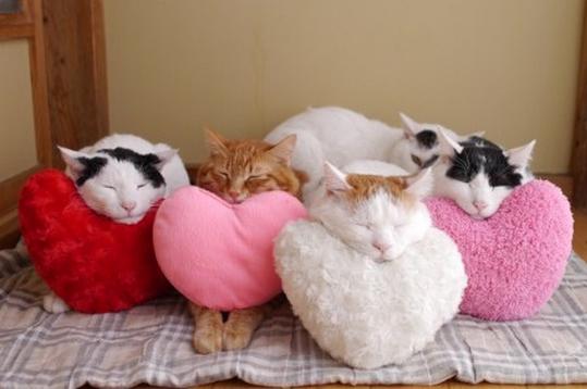 Gatos recostados sobre cojines de corazón de diferentes colores