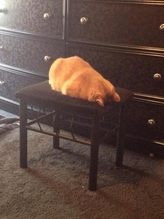 Gato acostado sobe un banco con la cabeza hacia abajo