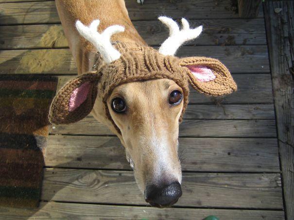 Gorro para tu perro con diseño de venado