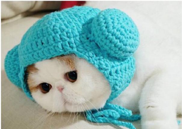 Gorro para tu gato en color azul