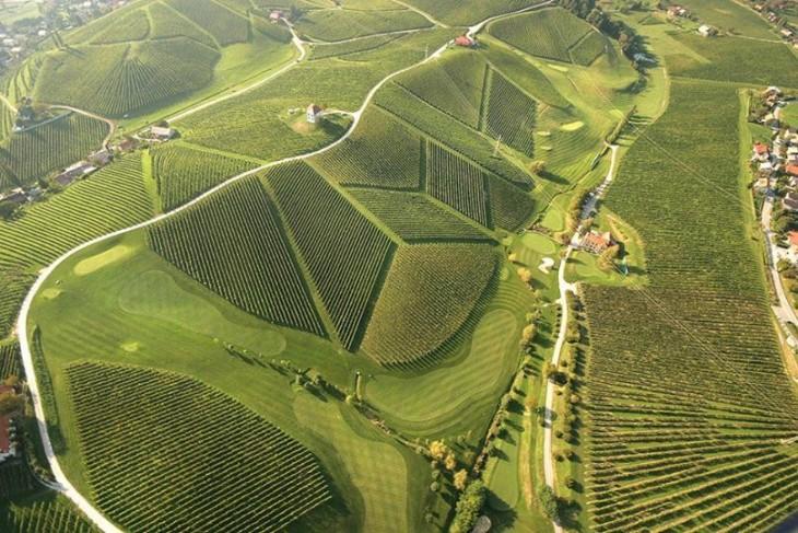Viñedos de Eslovenia con formas alineados