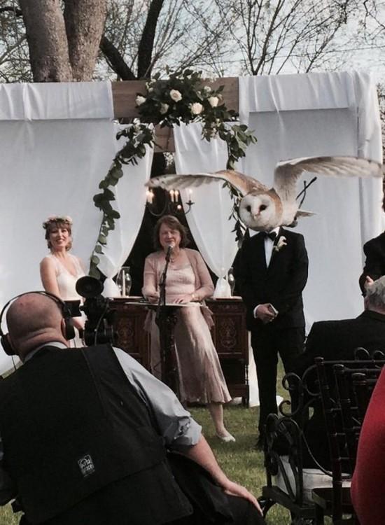 Una pareja de novio en su boda donde el novio tiene un búho frente a él