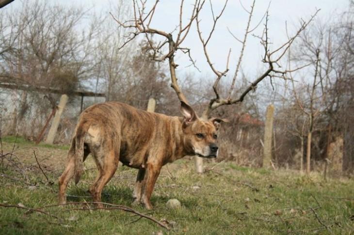 Un perro que simula tener cuernos en un bosque
