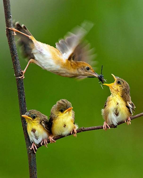 Pájaros sobre un árbol alimentando a otros pájaros
