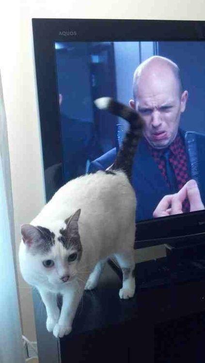 Personaje dentro de una televisión simulando que ve feo a un gato frente a él