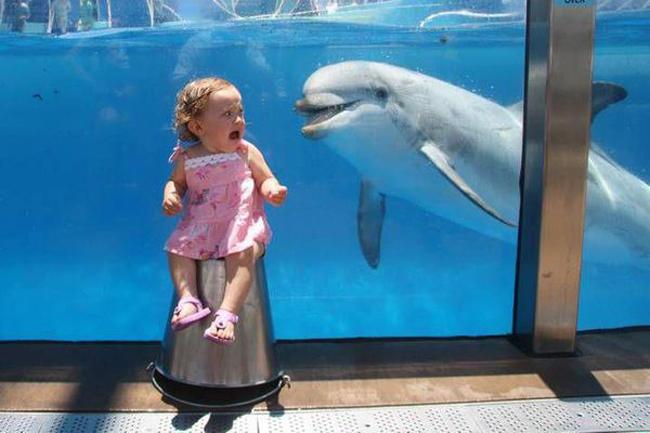 Fotografía de una niña asustada por un delfín que esta detrás de un vidrio