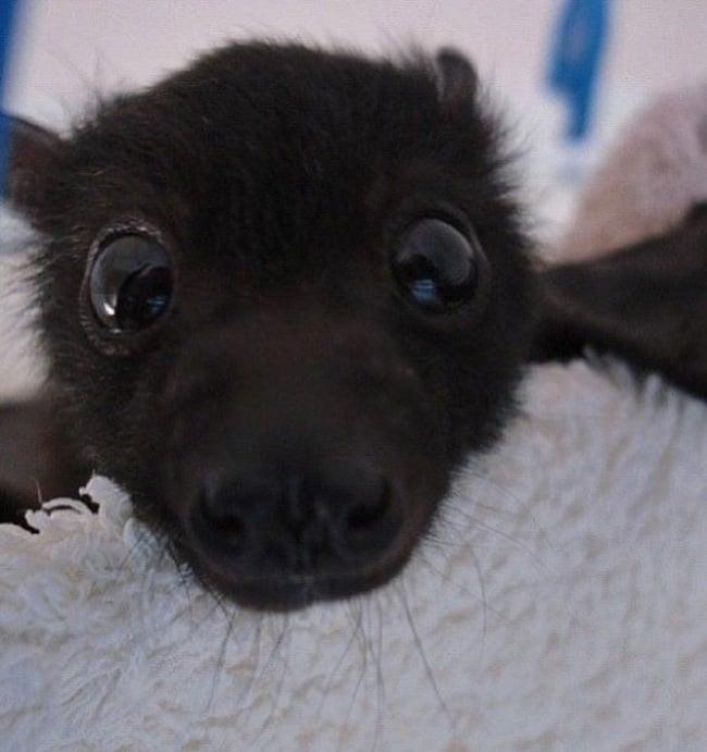 Cara de un murciélago recargado sobre algo en color blanco