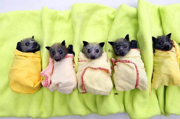 Murciélagos envueltos en cobijas sobre una cobija verde