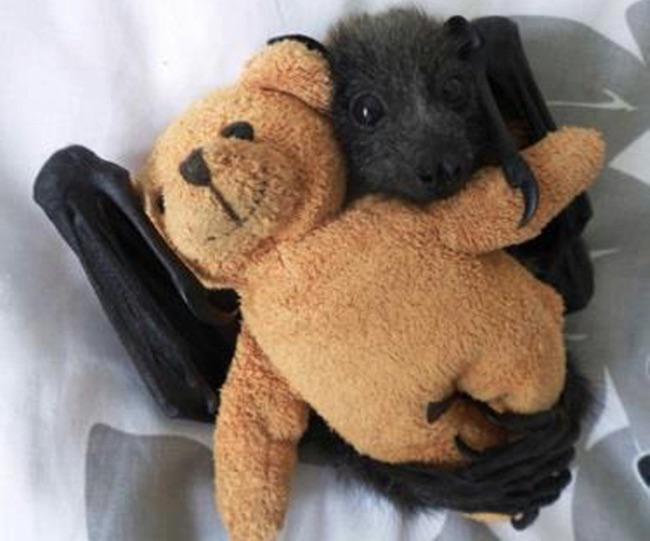Murciélago abrazado a un oso de peluche