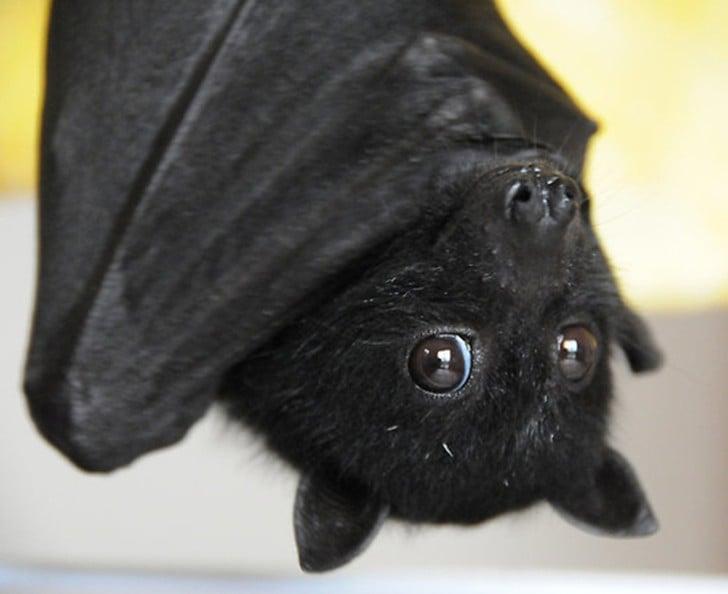 Murciélago de color negro