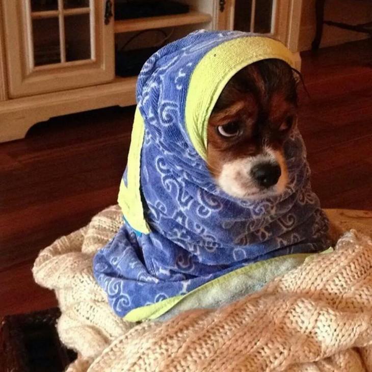 Perro con cara de triste envuelto en una toalla