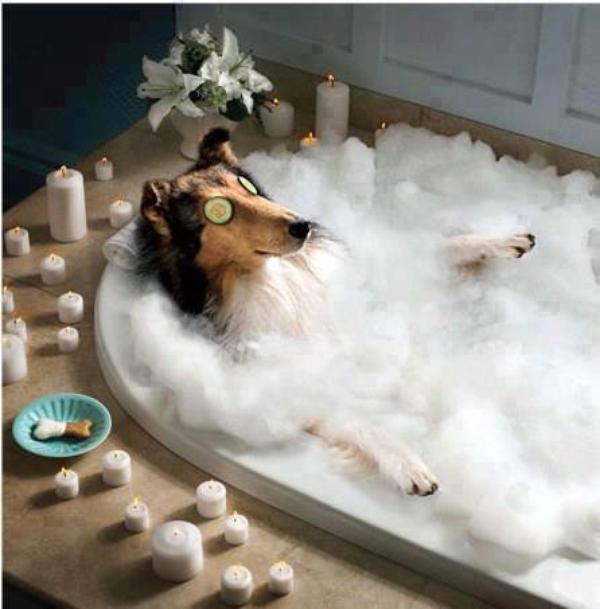 Perro dentro de una tina con espuma y velas alrededor