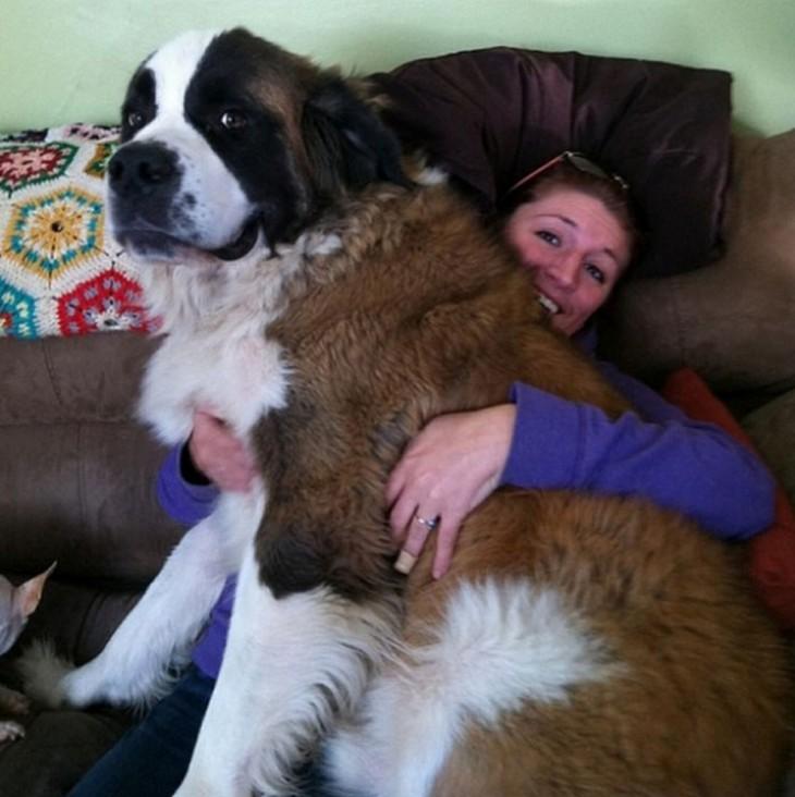 Un perro grande encima de una mujer