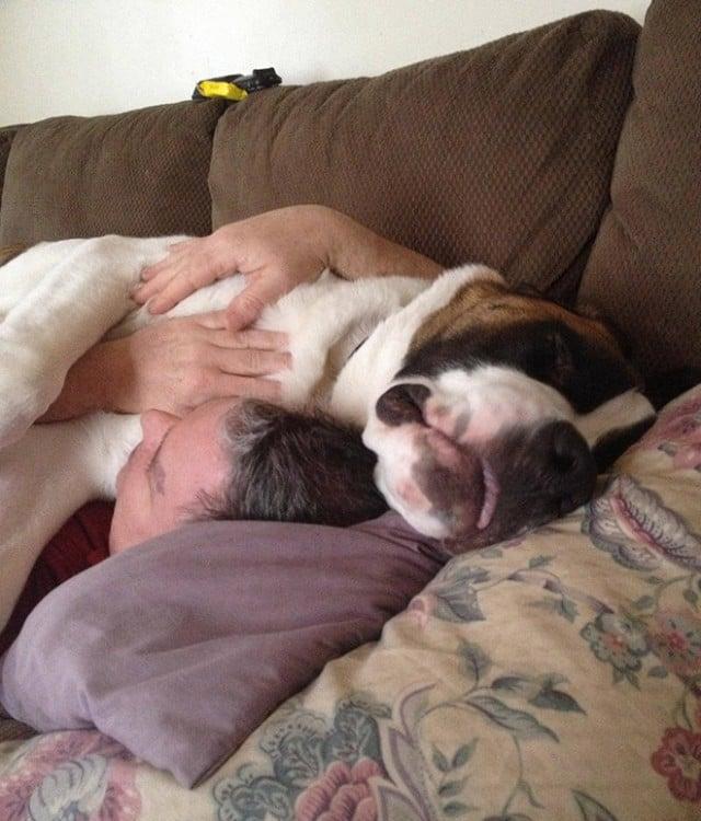 un perro grande dormido sobre un hombre en un sillon