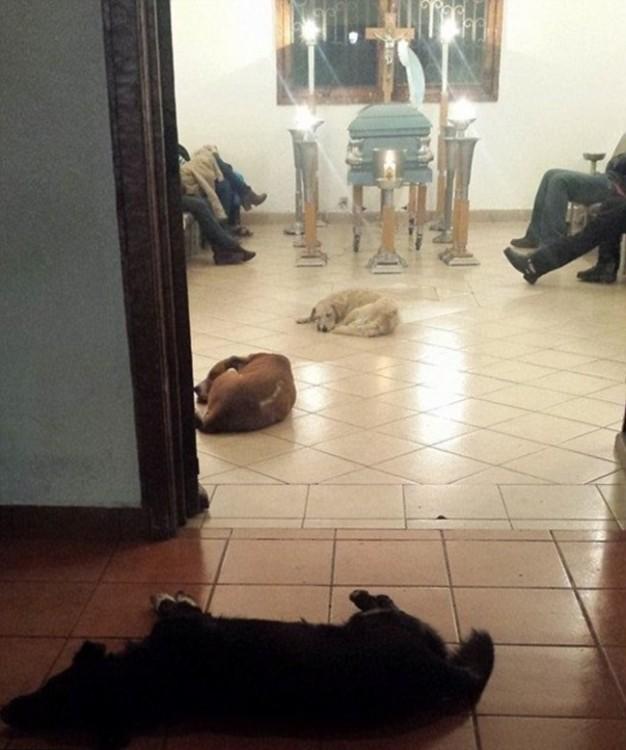 perros en el funeral de margarita suarez merida yucatán