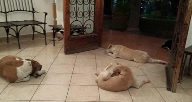 perros invaden funeral de mujer mexicana
