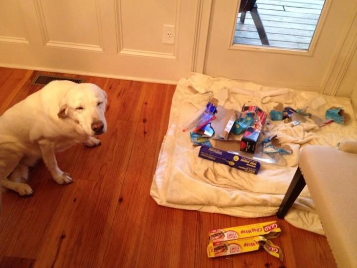 Perro frente una colchoneta con cosas encima
