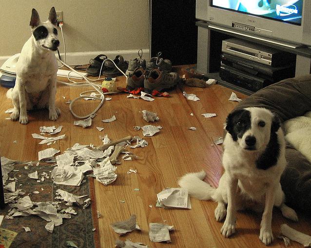 Dos perros en una sala con pedazos de papel en el piso