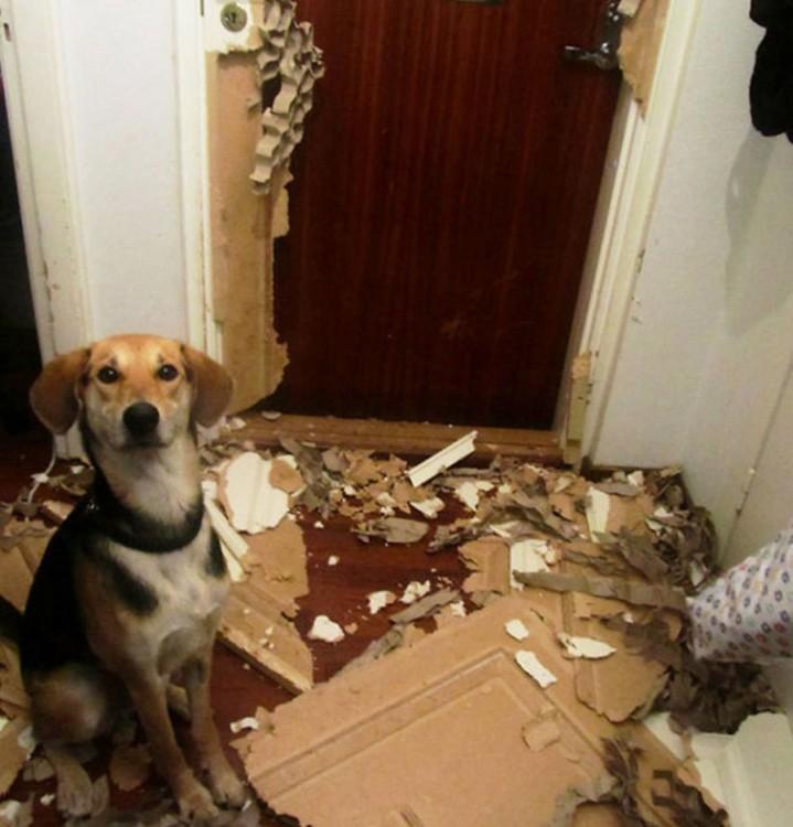 Perro frente a una puerta destrozada