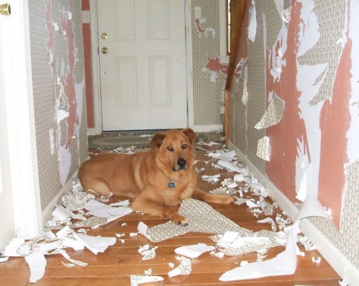 Perro acostado en el suelo de un pasillo con pedazos de una pared destrozada