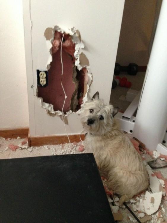 Perro frente a una pared destrozada y pedazos alrededor