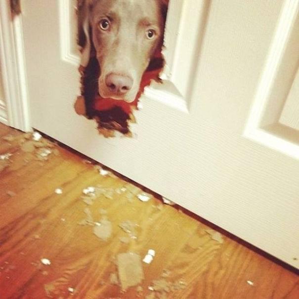 Cabeza de un perro asomándose por un agujero de una puerta