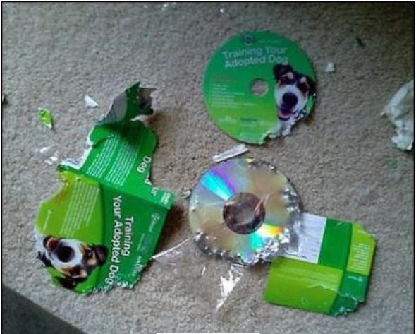 Pedazos de un CD destrozados por un perro